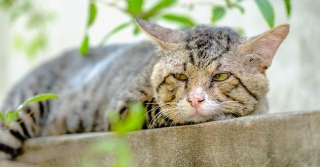 comment s'occuper d'un chat âgé vieillissant