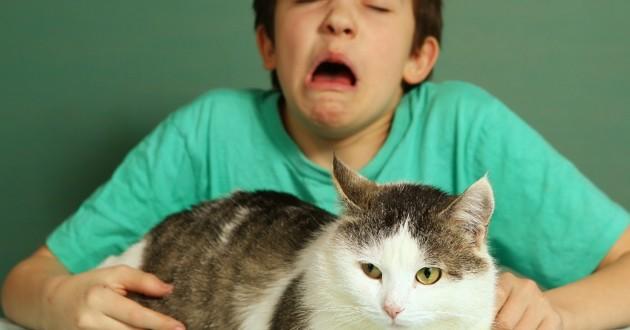chat allergie