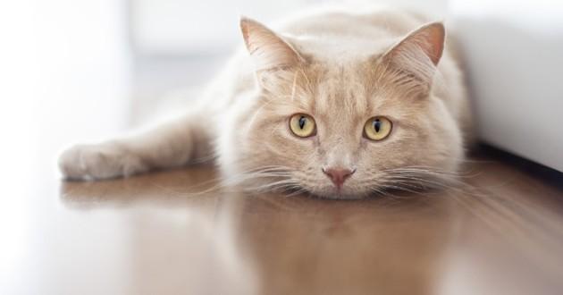 Chat allongé sur le sol