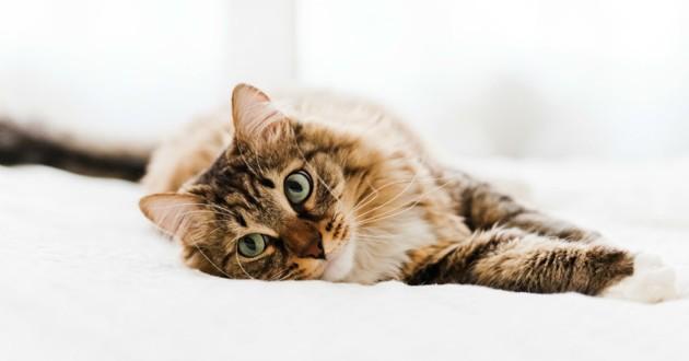 chat amputé