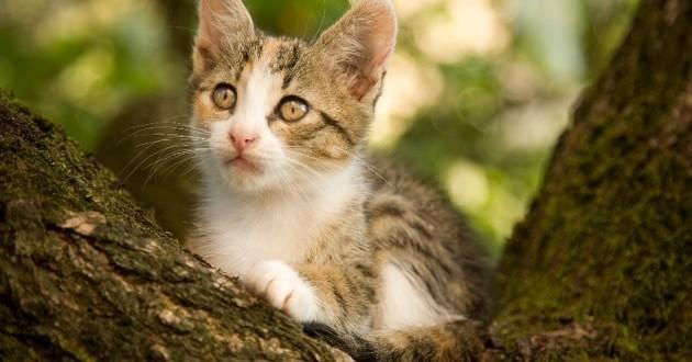 chaton sauvé arbre new york