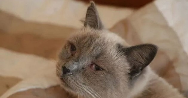 chats atteints du coryza