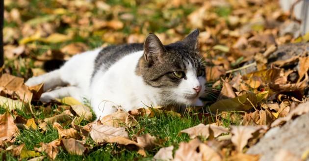 chat feuilles automne