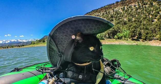 chat noir voyage
