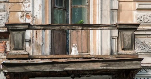 chaton balcon