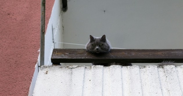 chat balcon