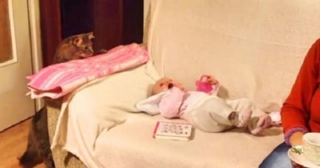 chat et bébé