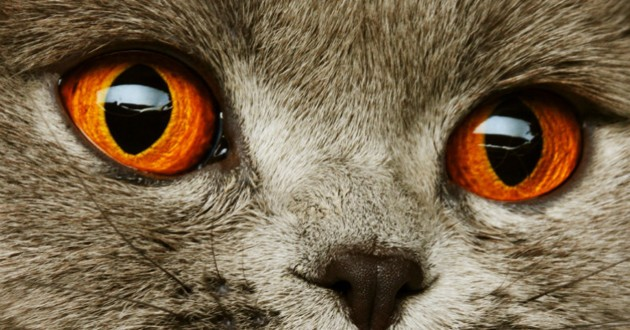 chat beaux yeux