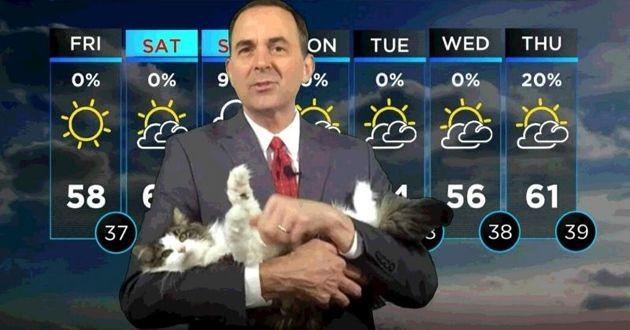 betty le chat météo
