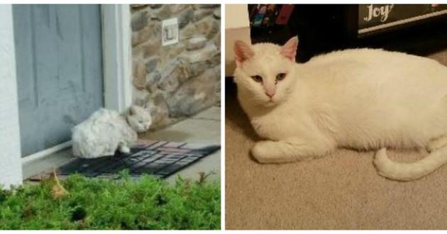 chat blanc émacié