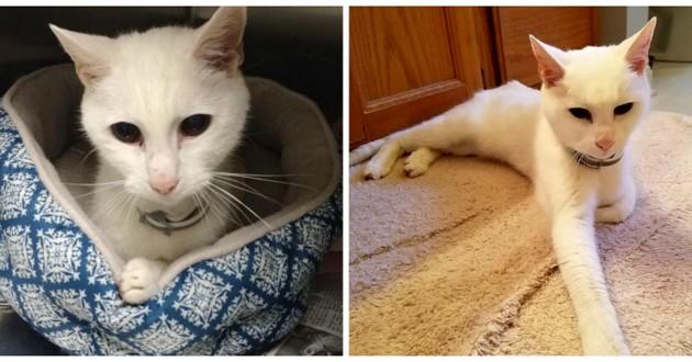 chat blanc senior