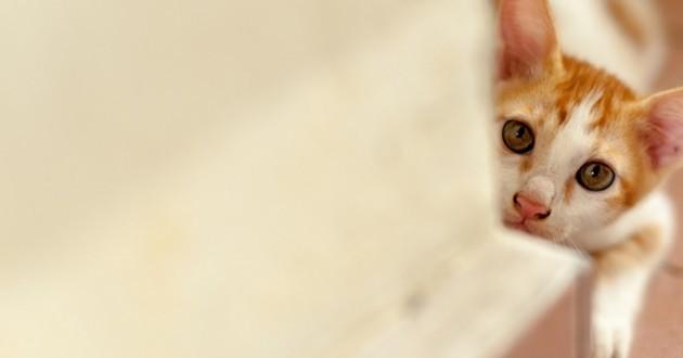 chat étude boîte bruit
