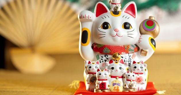 chat bonne fortune
