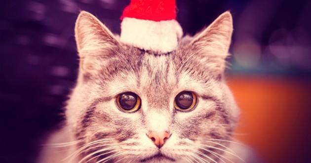 chat bonnet pere noel