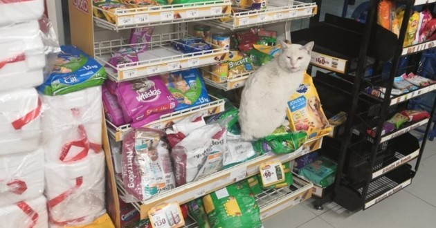 chat dans une boutique