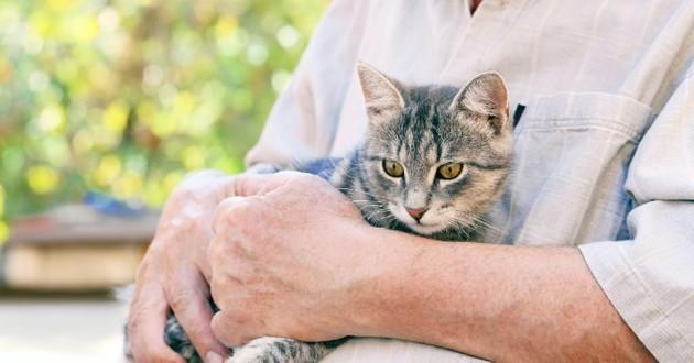 chat âgé dans les bras de son maître