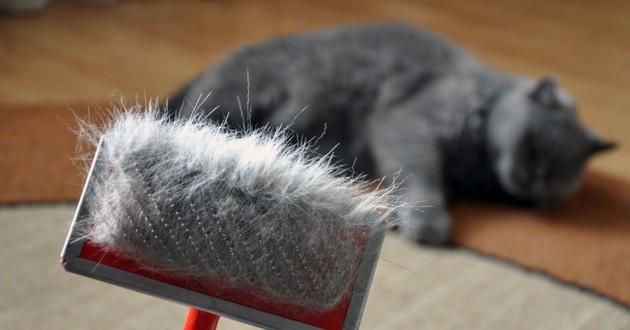 brosse pour les poils de chat