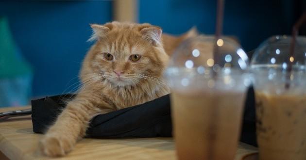 bar à chats dijon