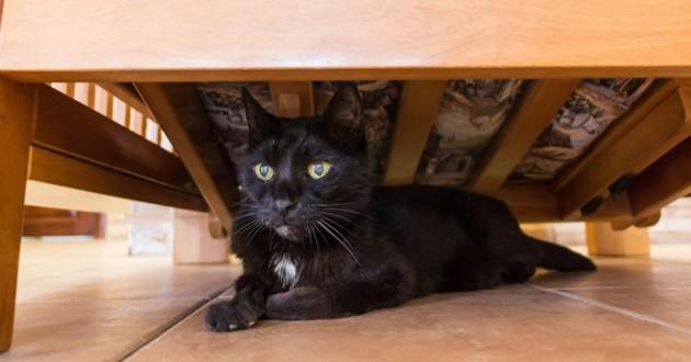 chat noir sous lit