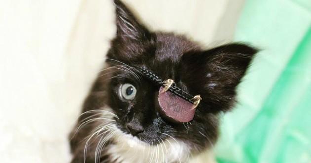 chaton cache oeil