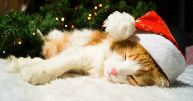 chat cadeaux noel