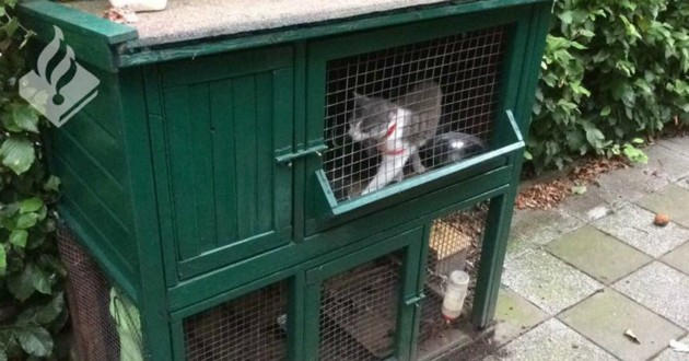 chatons cage lapin