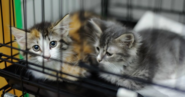 chats sauvetage cage spa