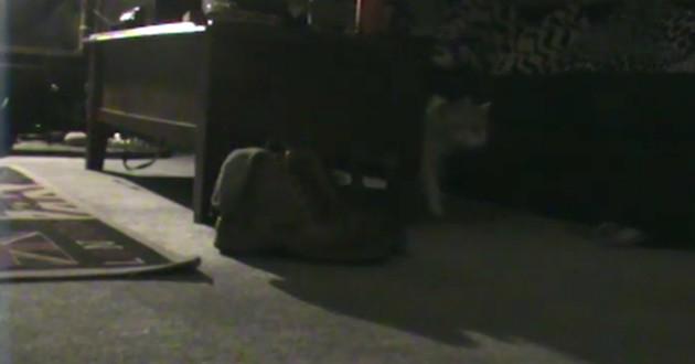 chat filmé par un caméra de surveillance