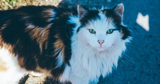 Très beau chat