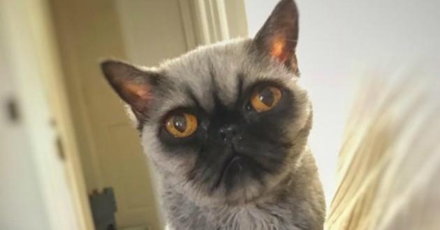 chat persan carlin
