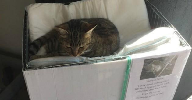 chat qui dort sur un carton