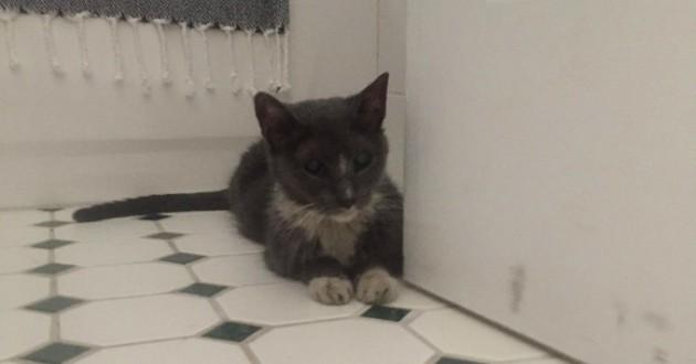 chat abandonné cave