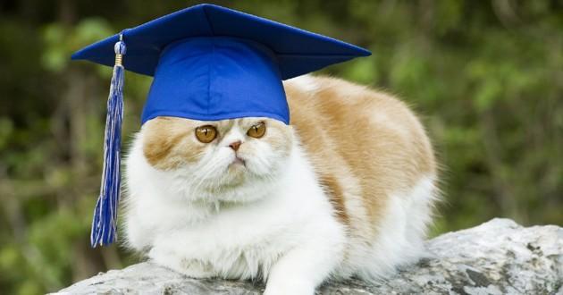 un chat qui porte un chapeau