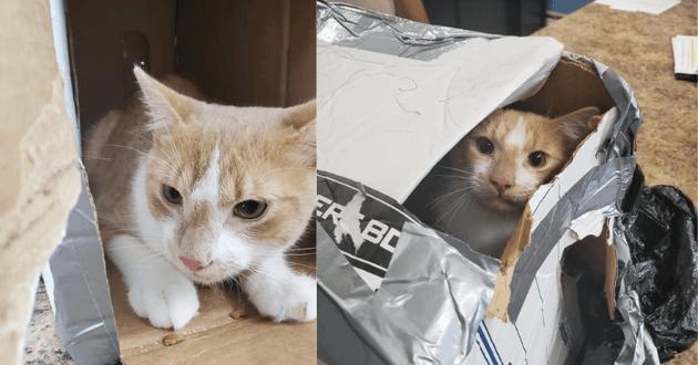 Chaton rescapé dans son carton