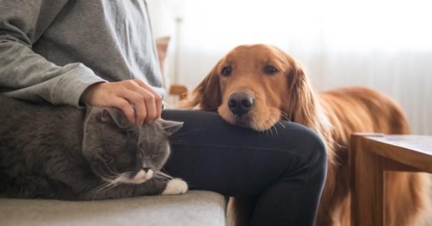 un chat et un chien qui passent du temps avec leur maître