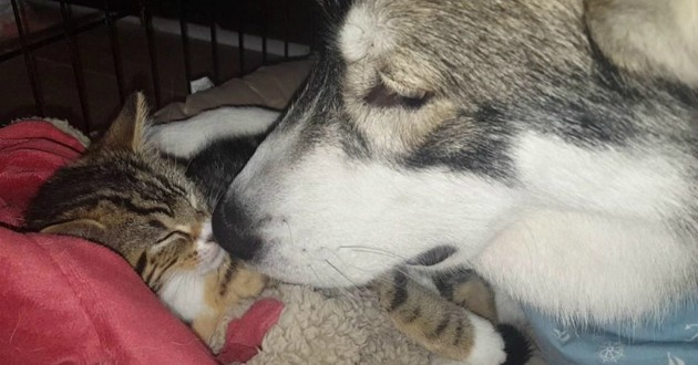 chat chien amour