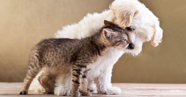 chien et chat câlin