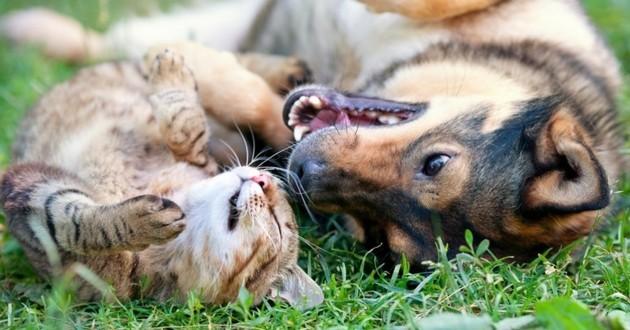la vision chez le chat et le chien