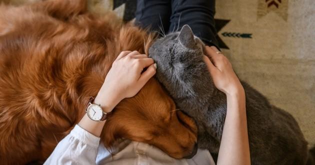 chat et chien qui font un calin