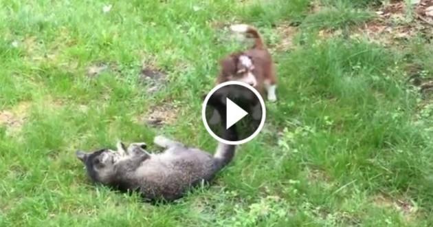 chat chien jeu