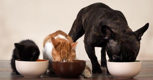 chat et chien qui mangent