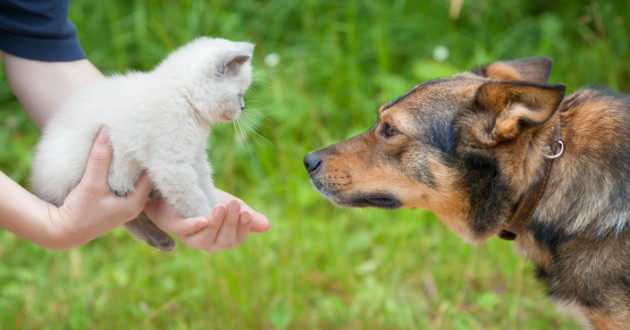chat rencontre chien