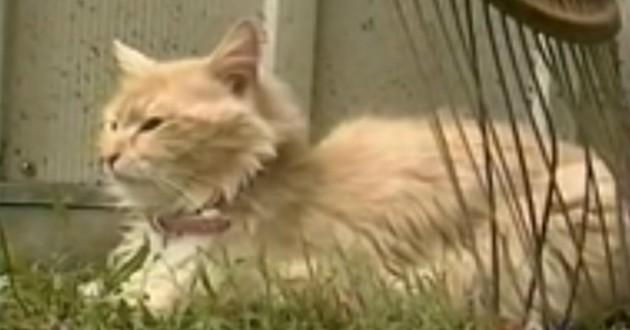 chatt rousse