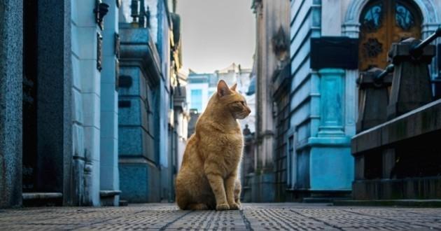 chat tombe cimetière