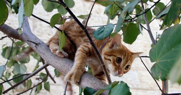 ce courageux petit gar on est rest coinc dans un arbre. Black Bedroom Furniture Sets. Home Design Ideas
