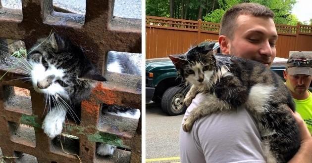 Chat coincé dans une grille d'évacuation