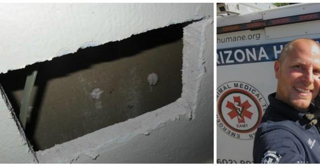 chat coincé mur
