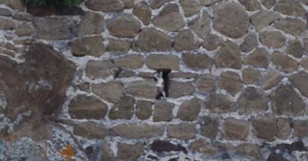 chat coincé rocher