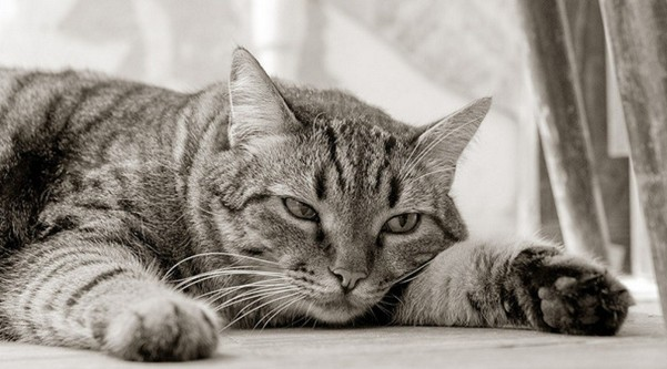chat déprime hiver