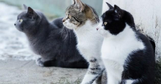 chats couleur